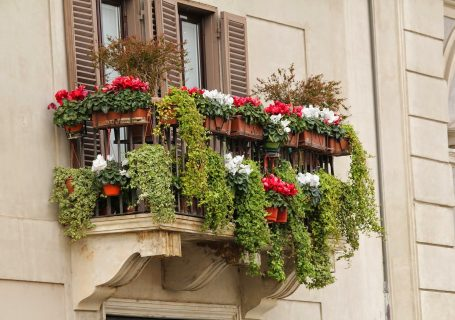 Potager balcon