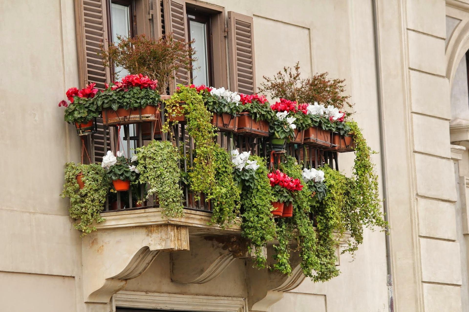 Potager sur un balcon, c'est possible !