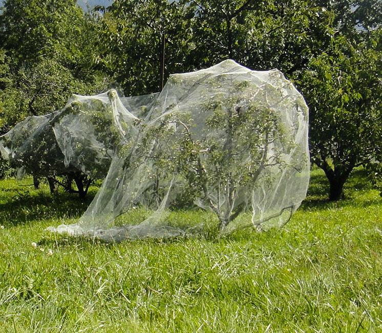 Filet anti insectes altCarpo