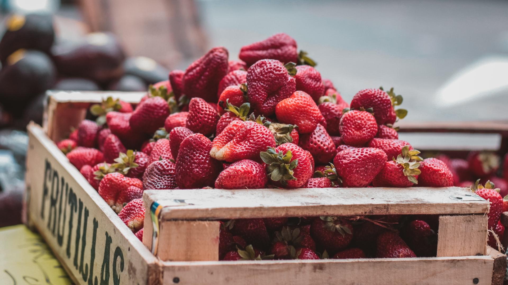 Cultiver des fraises sous une serre de jardin